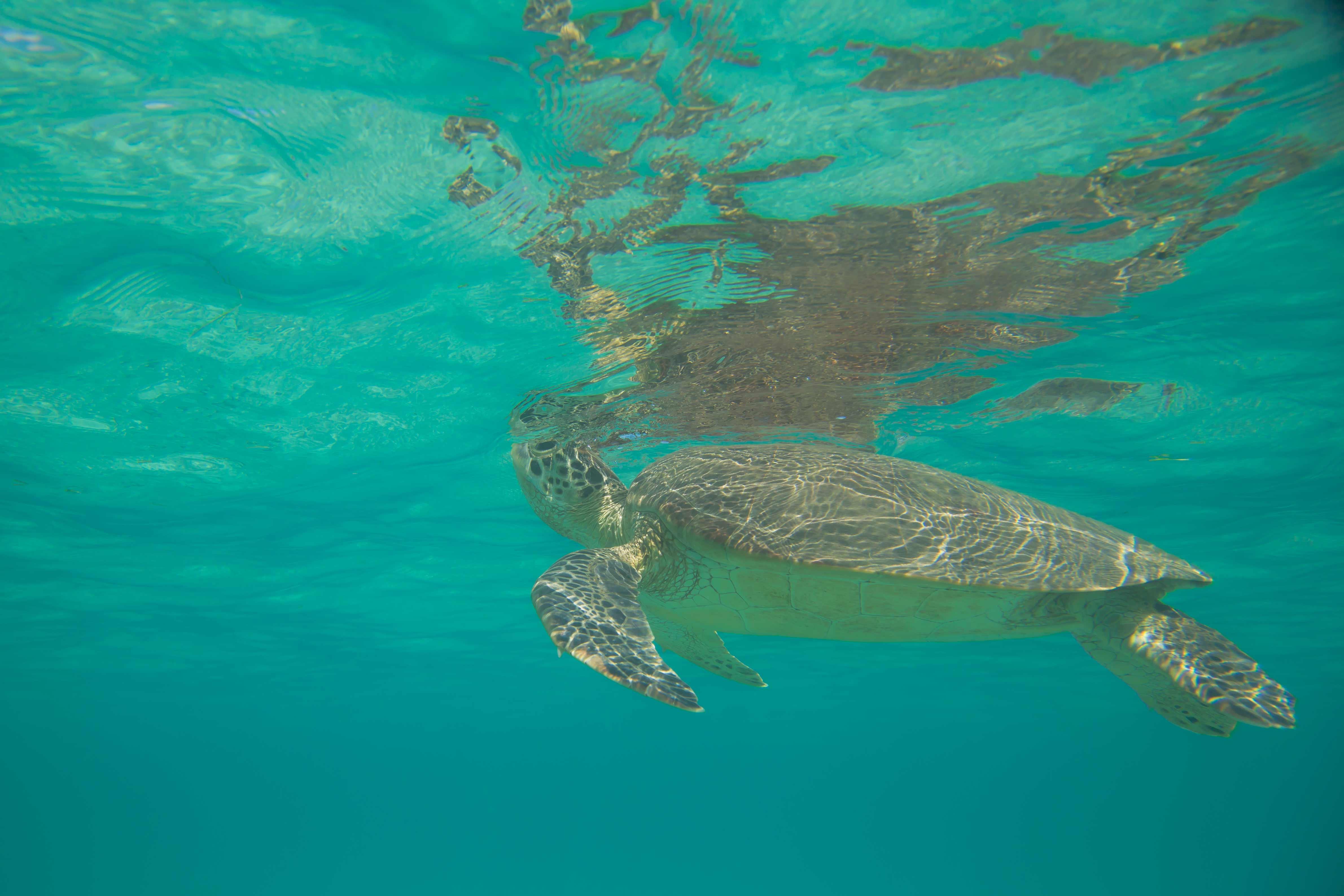 Schildkröten Mayotte